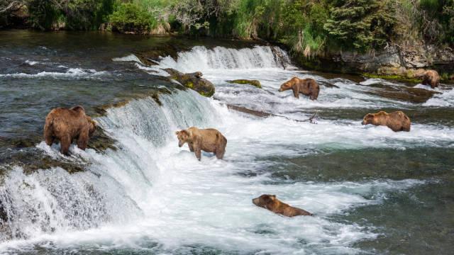 Bear Watching in Alaska - Best Time