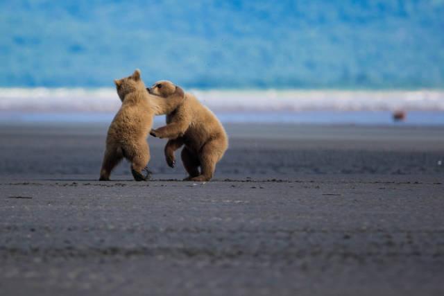 Bear Watching in Alaska - Best Season