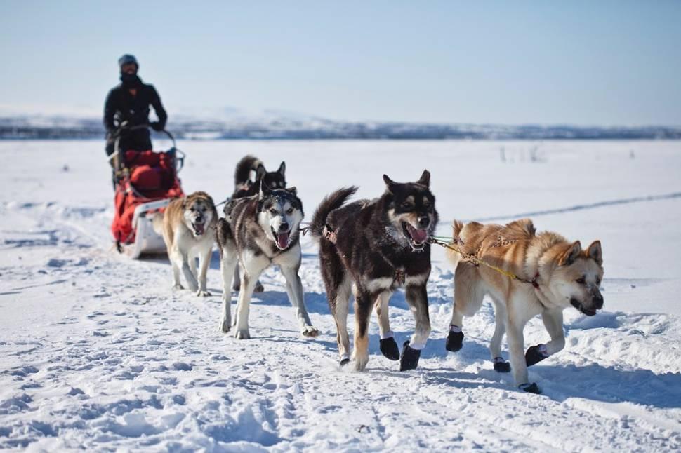 Dog Sledding in Alaska - Best Time