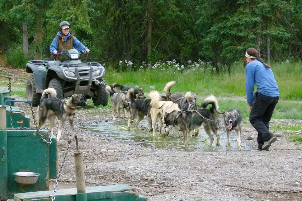 Dog-sled summer training