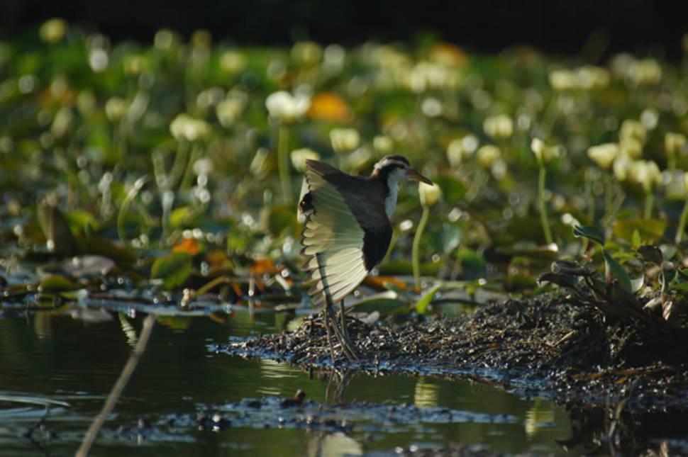 Birdwatching in Argentina - Best Season