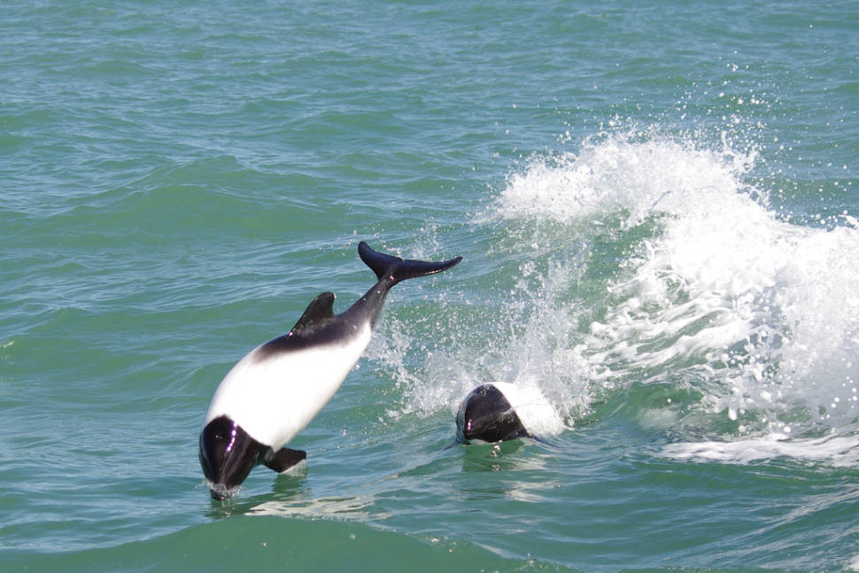 Dolphin Watching in Argentina - Best Season