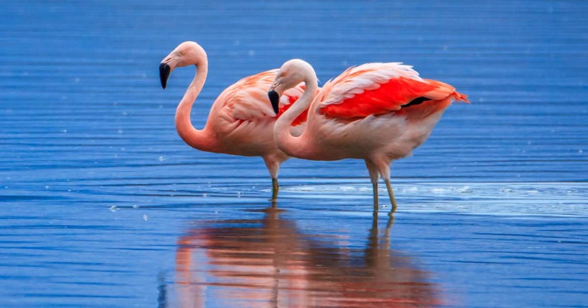 Flamingo Watching in Argentina - Best Time