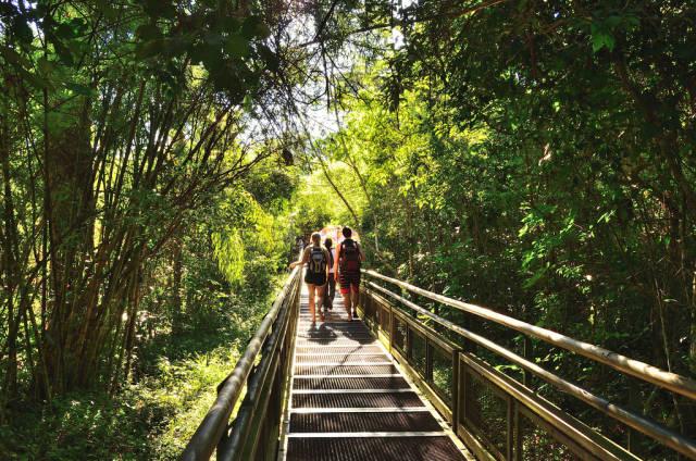Misiones Jungle in Argentina - Best Season