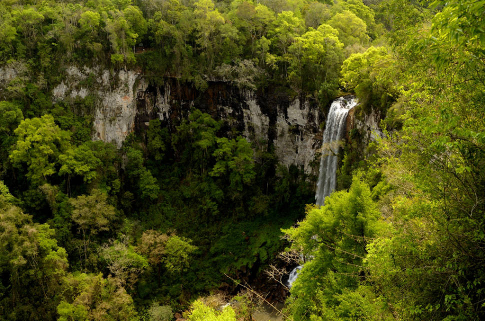 Misiones Jungle in Argentina - Best Time