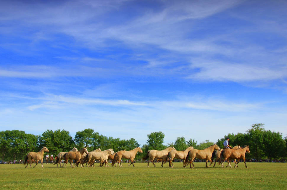 Best time to see Pampas in Argentina