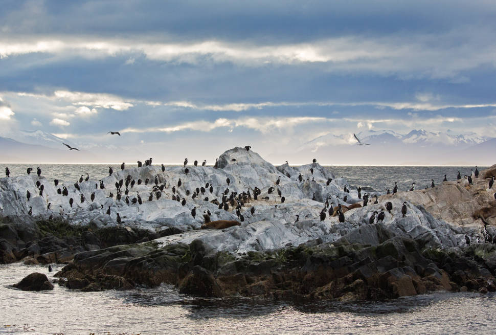 Best time to see Patagonian Cormorants