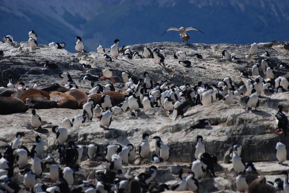 Birds and Seals on Island Near Ushuaia, Argentina