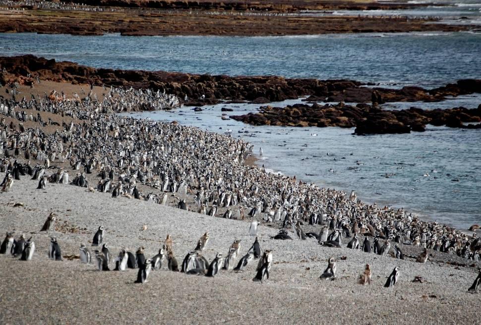 Punta Tomba Penguin Rookery
