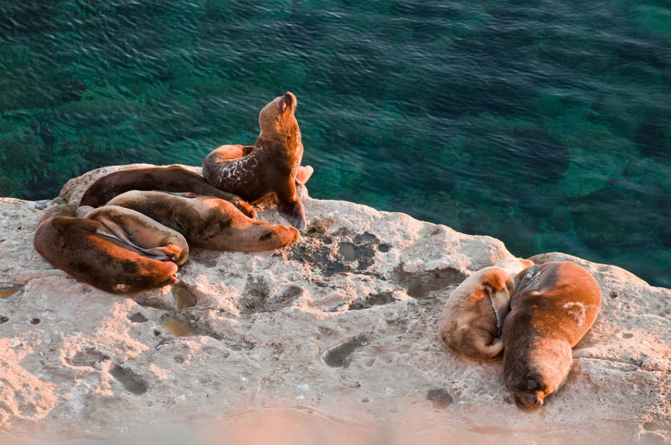 Sea Lion Pups in Argentina - Best Time