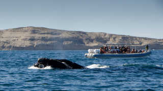 Southern Right Whale Watching