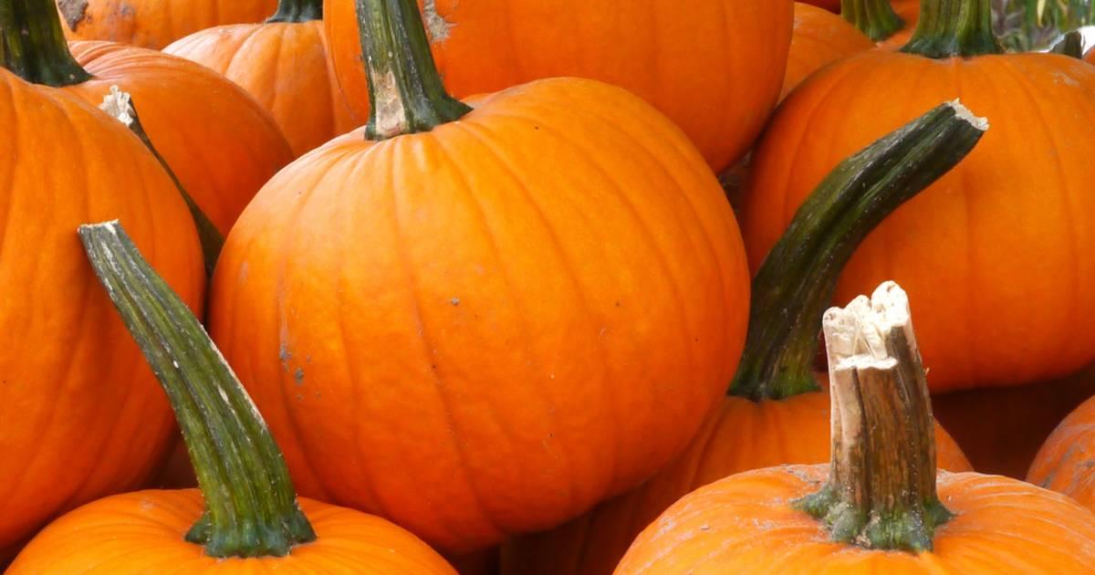 Pumpkin Season in Australia - Best Time