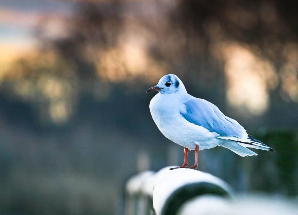 Birdwatching in Bavaria - Best Time