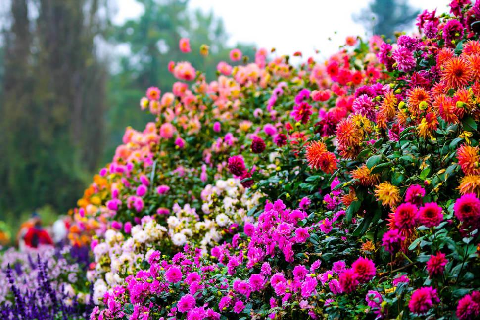 Flowers of Mainau Island in Bavaria - Best Time
