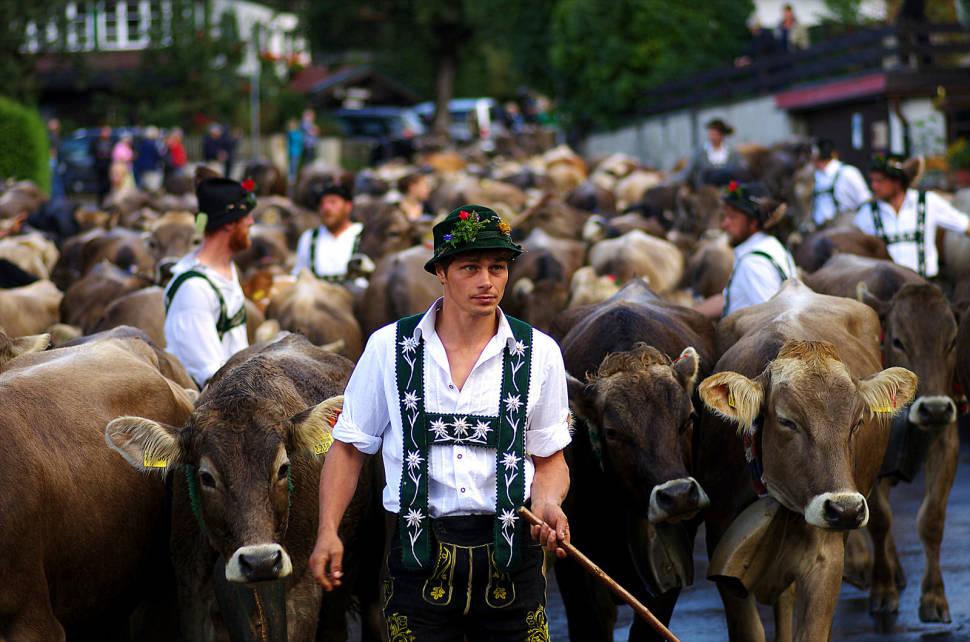 Viehscheid in Bavaria - Best Season