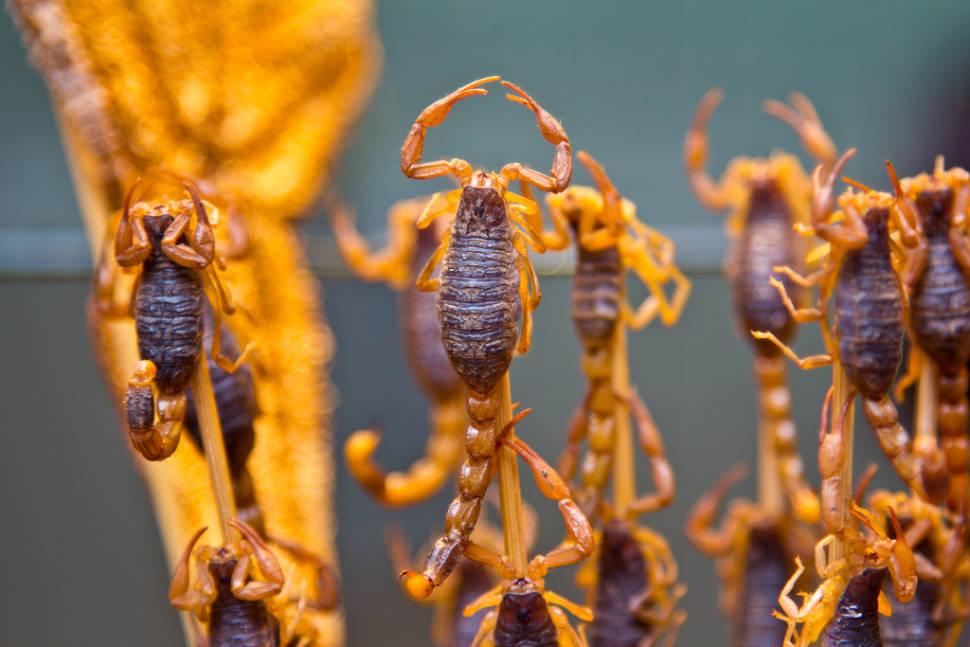 Fried Scorpions in Beijing - Best Season