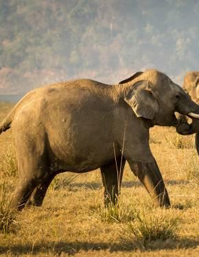 Beste Wildtierbegegnungen