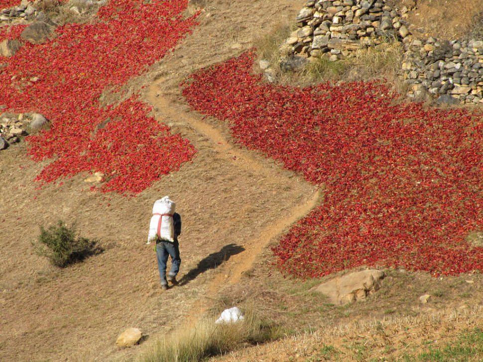 Best time to see Red Chilli Peppers Season in Bhutan