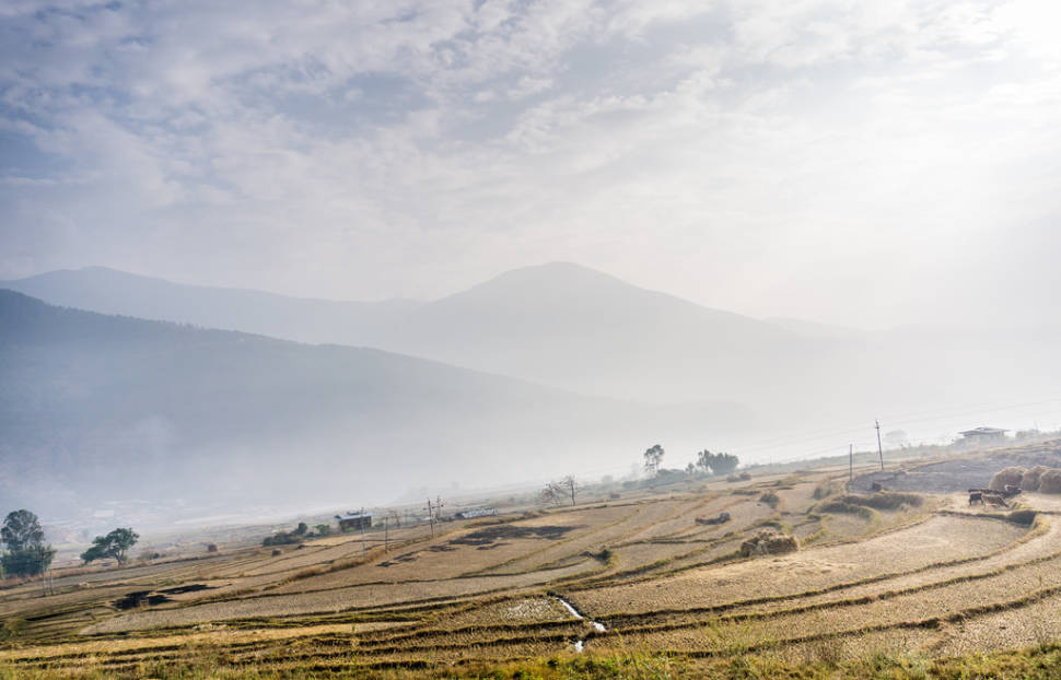 Best time for Rice Harvest in Bhutan