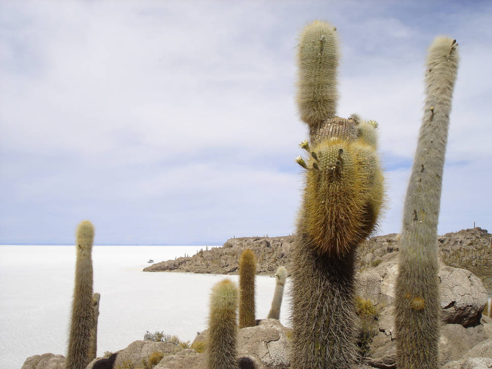 Best time for Blooming Cacti in Bolivia