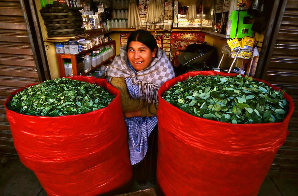 Coca Leaves Harvest in Bolivia - Best Season
