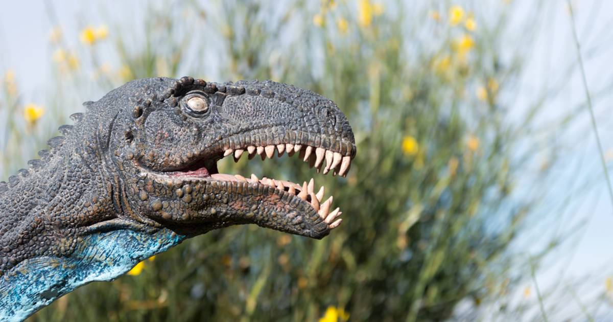 Dinosaur Footprints in Bolivia - Best Time