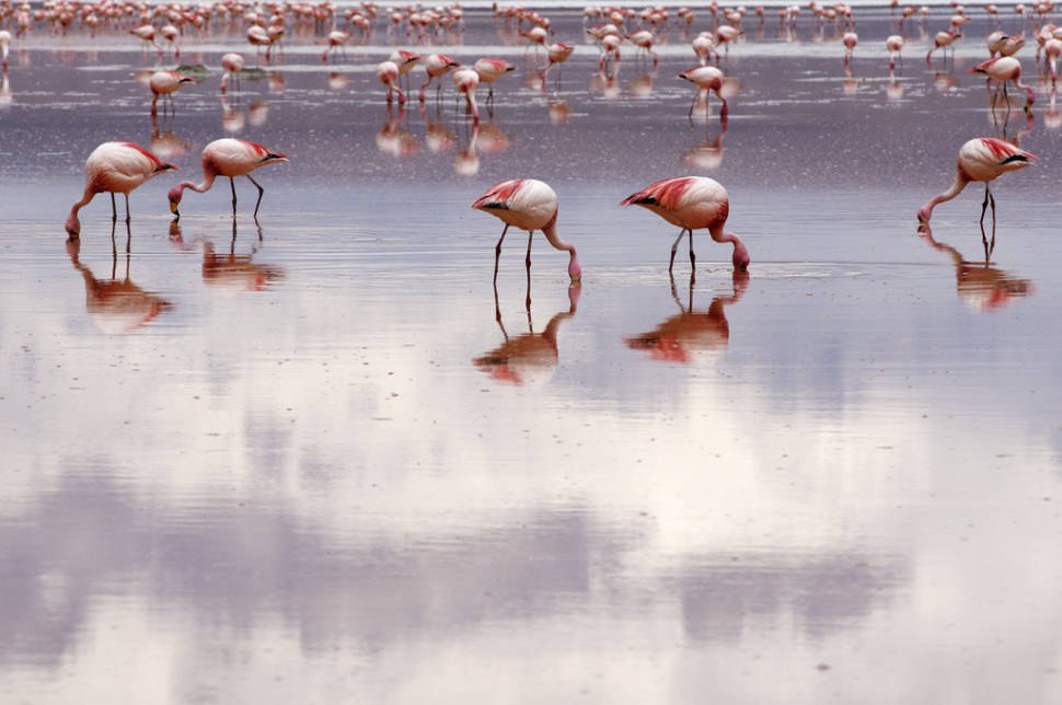 Best time for Flamingos in Bolivia