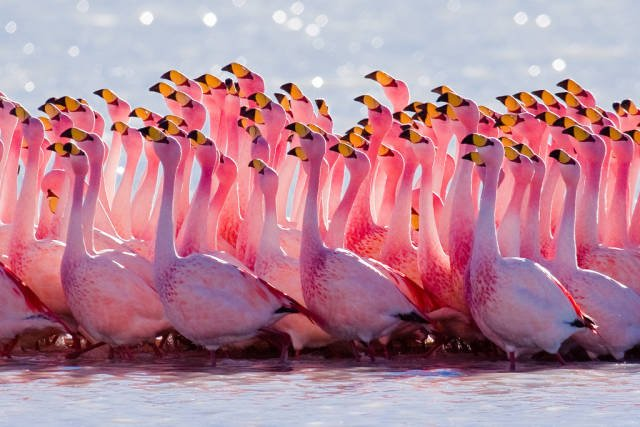 Flamingos in Bolivia - Best Time