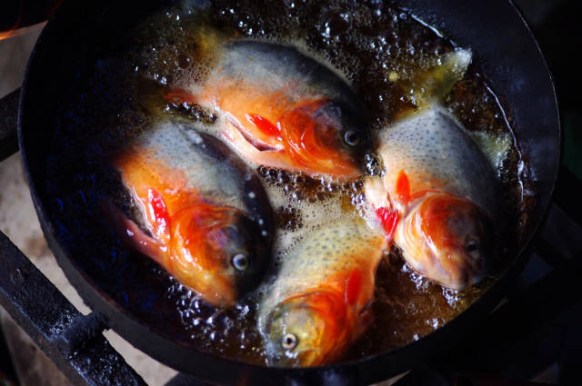Best time for Piranha Fishing in Bolivia