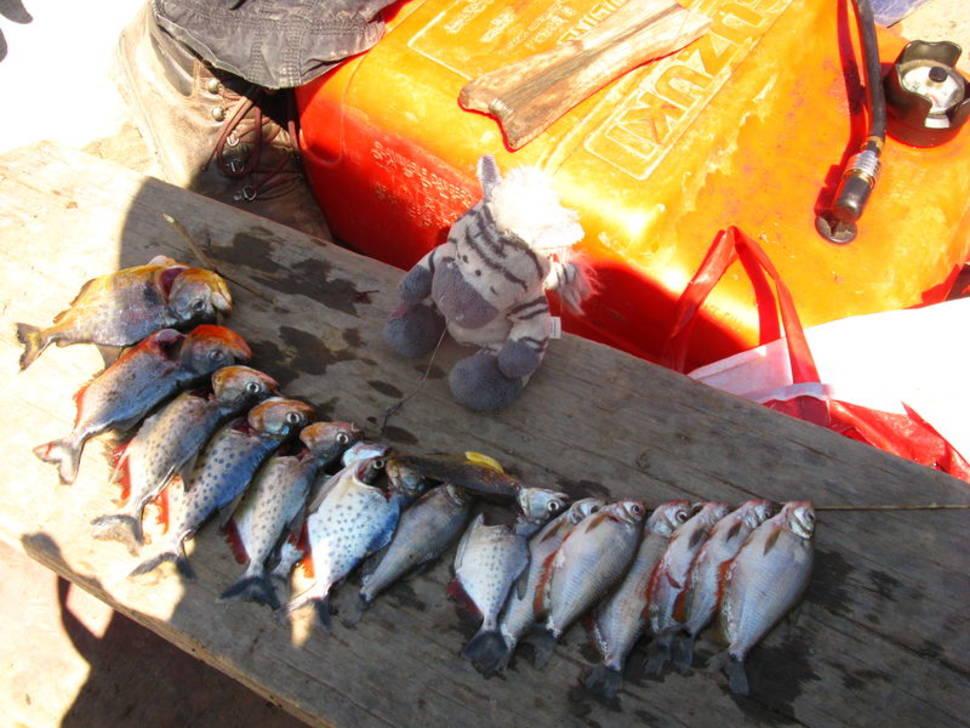Piranha Fishing in Bolivia - Best Season