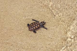 Baby Turtles Hatching Season