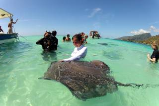 Diving & Swimming with Manta Rays