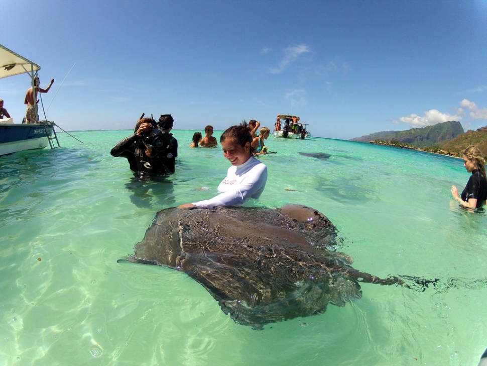 Diving & Swimming with Manta Rays in Bora Bora - Best Time