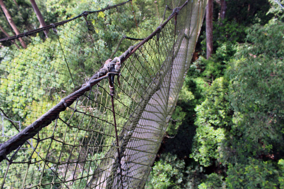 Canopy Walks in Borneo - Best Time