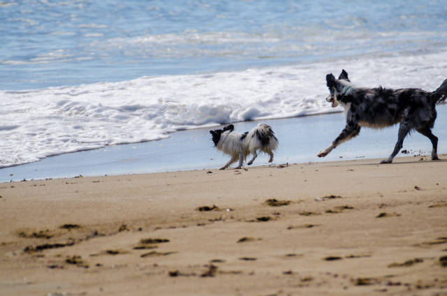 Dogs allowed on the beach from mid-October to mid-April