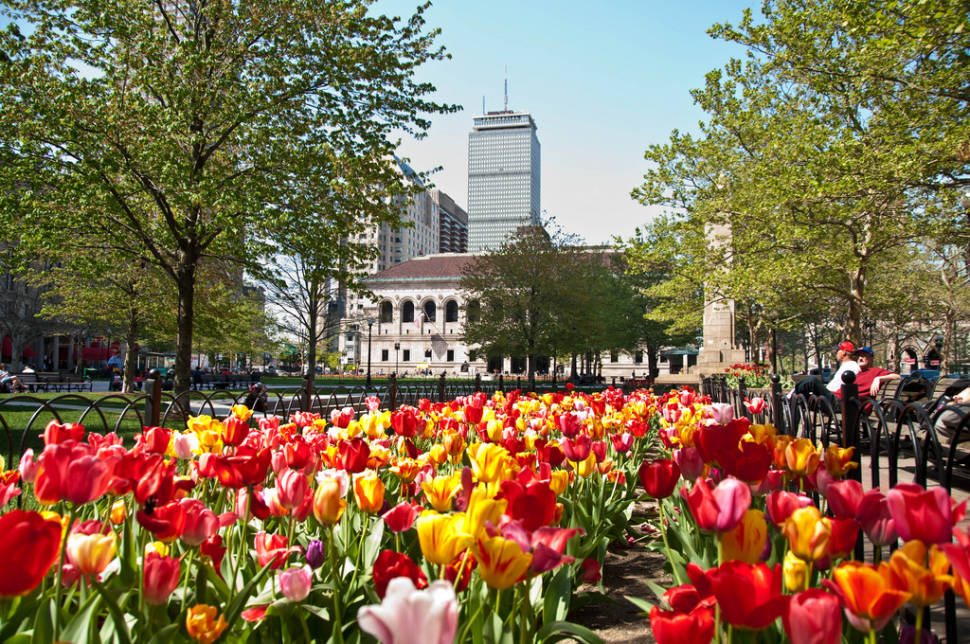 Spring Blooms in Boston - Best Season