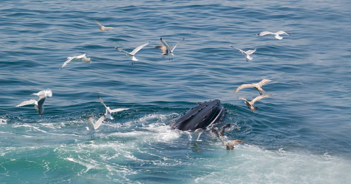Whale Watching in Boston - Best Time