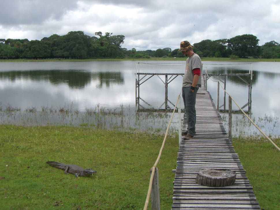 Alligator encounter in Pantanal