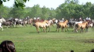 Festival of Tradition (Gaucho Festival)