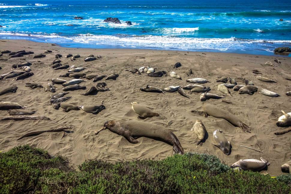 Elephant Seals in California - Best Time