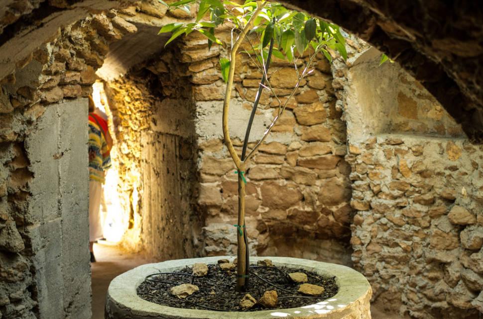 Forestiere Underground Gardens in California - Best Season