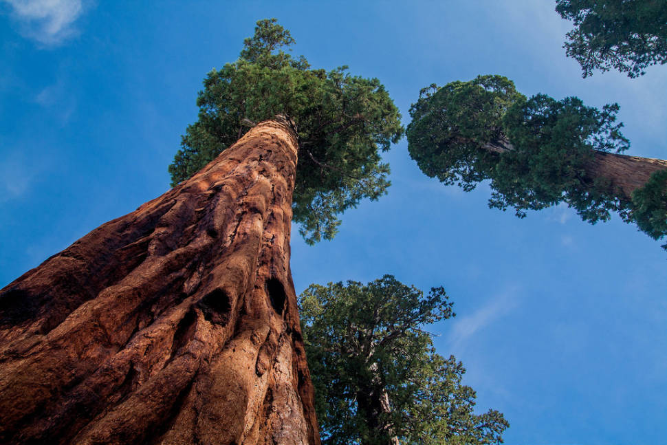 Sequoia National Park  in California - Best Time