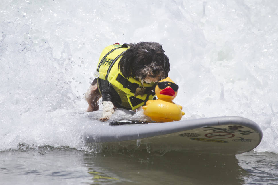 Best time for Surf Dog Competition in California
