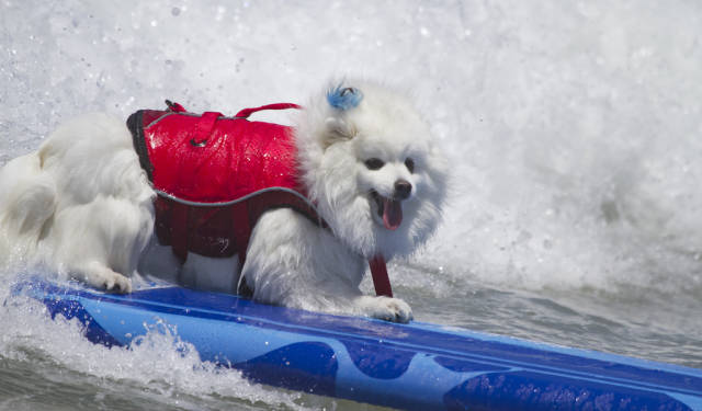 Best time to see Surf Dog Competition in California