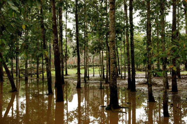 Best time for Angkor Jungles and Temples in Cambodia
