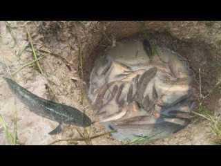 Deep Hole Fishing