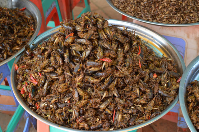 Eat Some Bugs! in Cambodia - Best Season