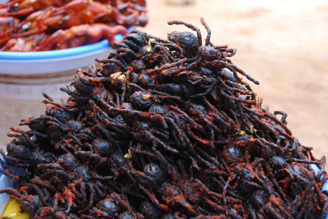 Fried Spiders in Cambodia - Best Time