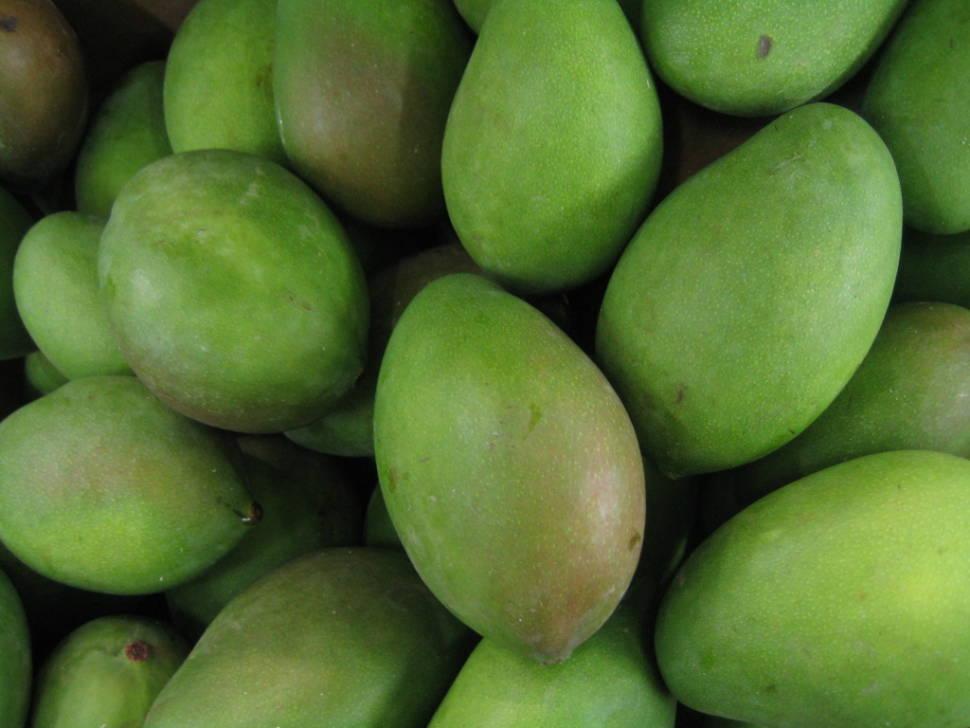 Mango Season in Cambodia - Best Season