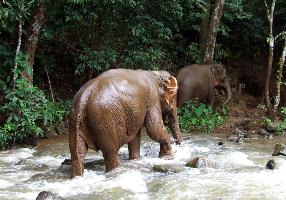 Best time for Wash an Elephant in Cambodia